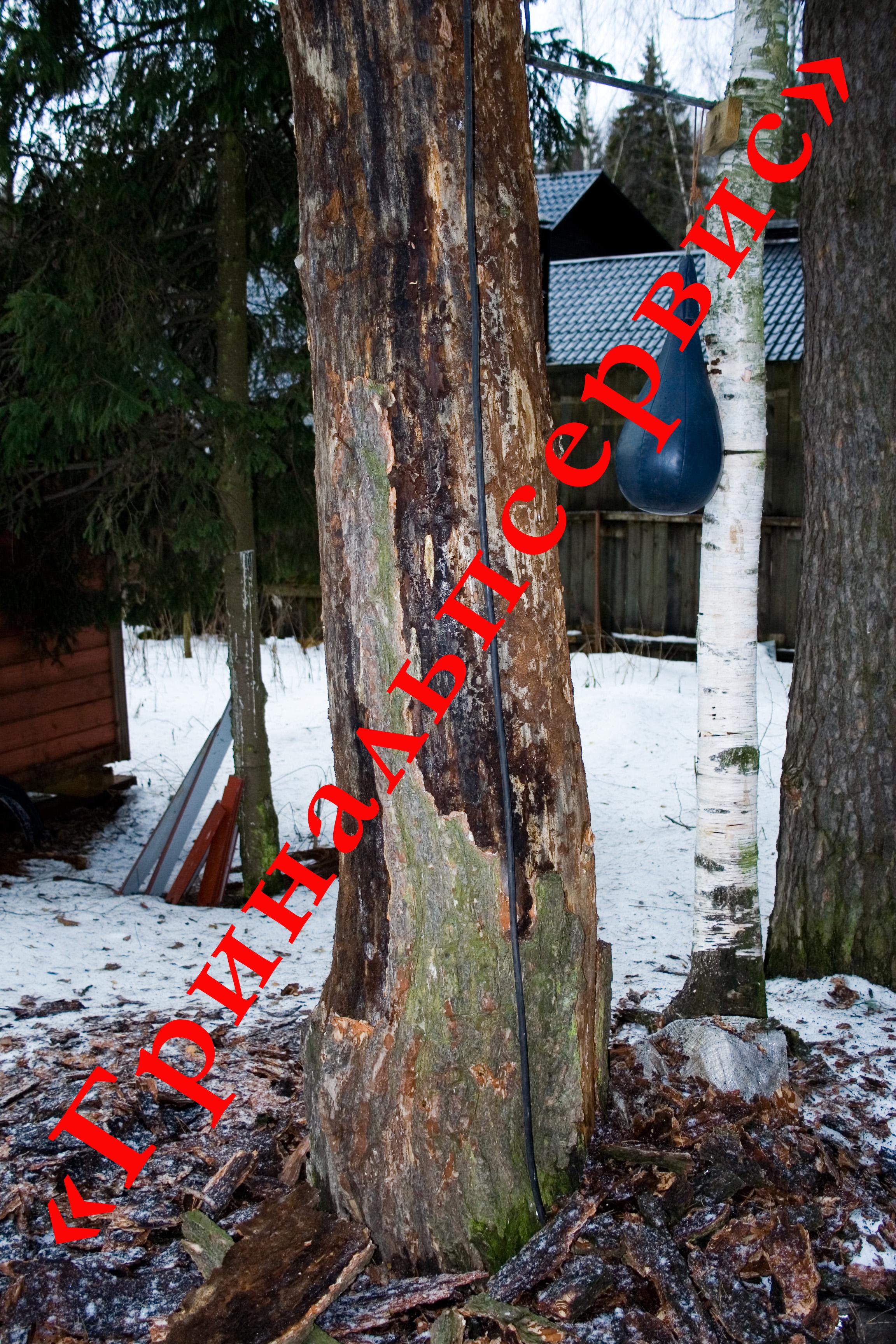 Лечение деревьев болезни деревьев